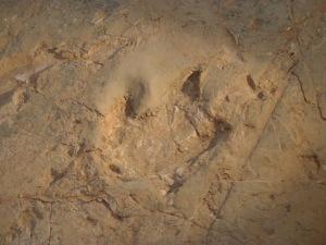 footprint